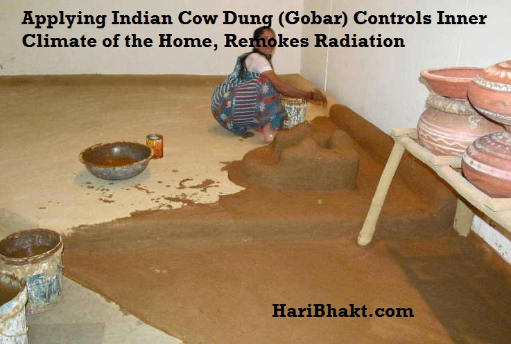 India-Cow-Dung-Miracles