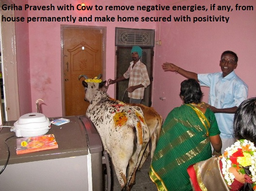 cow-grihapravesh