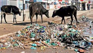 Slaughtering Cows, Feeding Them Garbage Would Lead To Cow Extinction And Therefore No Fertility, No Cultivation Would Grip World. STOP COW SLAUGHTER NOW BEFORE ITS TOO LATE