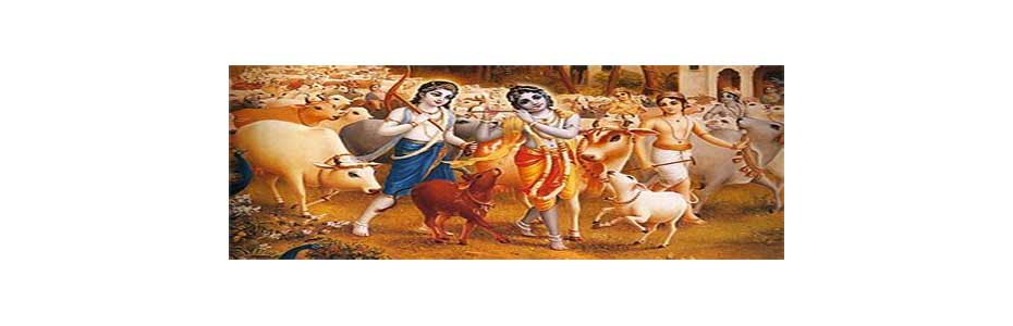 Lord Krishna Cared for Cows