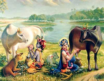 Vedic Texts Tell That Krishna Loved, Cared for Cows