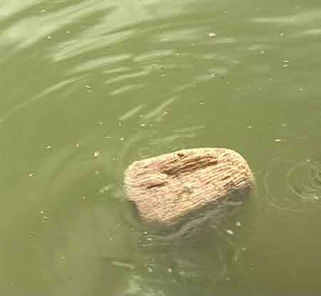 Floating Stone of Nal Neel of Ramayana
