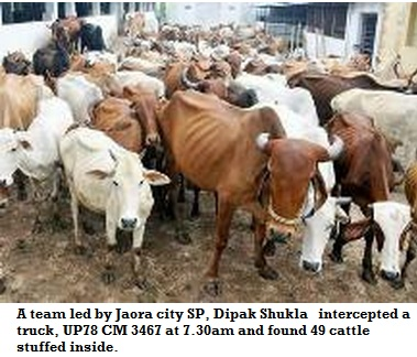 muslims arrested for smuggling cows, cattles in maharashtra
