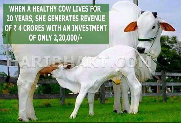 Indian Cow Facts: Gau Mata Benefits and Hindu Science