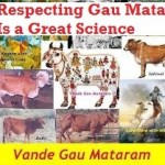 desi cow gau mata is greatest living being on earth