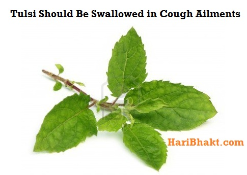 Tulsi is used as a herbal medicine in numerous ailments, including fever, common cold, coughs, sore throat