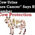 "A Welcome Move. ""Cow Urine Cure Cancer"" Says BJP Member"