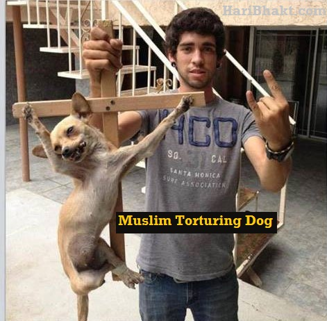 mus;lims torture pets, dogs, pigs, cows and animals