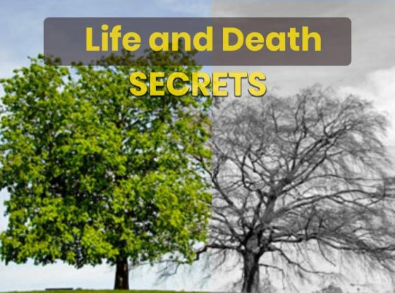 Hindu secrets world sorrow happiness life death