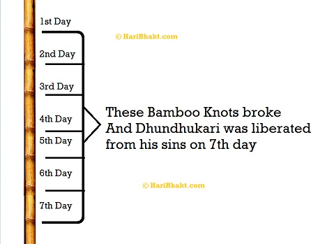 on the seventh day all the seven knots of the bamboo cracked after the Bhagavat   discourse and Dhundhkari attained salvation