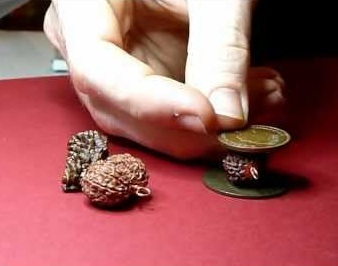 Rudraksha genuine test with copper coins