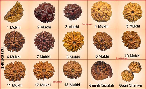 Types of Rudraksha - All Mukhis and Faces