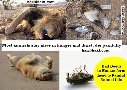 Become animal and die due to hunger or else behave like a pious person