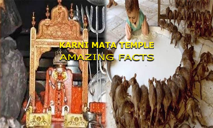 Karni mata mandir temple facts and miracles