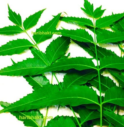 evil eye treatment neem leaves