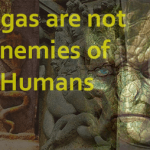 Nagas, Reptilian Race are Allies of Humans: Jaw Breaking Response to Conspiracy Theorists